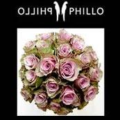 phillo flowers