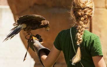 falconry hen party activity